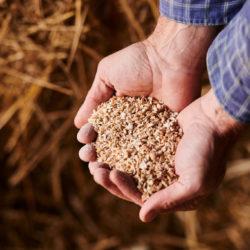 grains bio