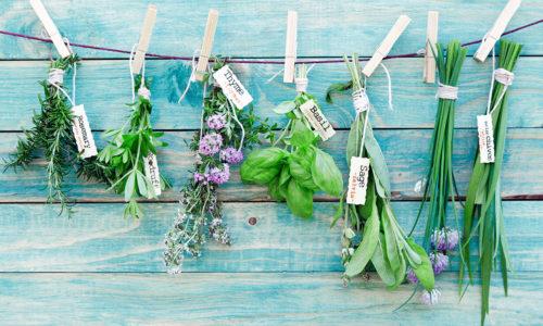 ensemble d'aromates bio