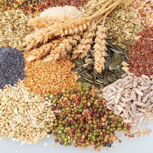 ensemble de graines et de récolte bio