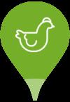 pictogramme poule