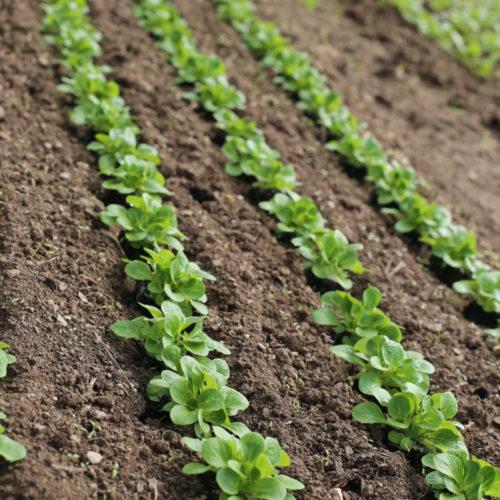 culture de plante bio