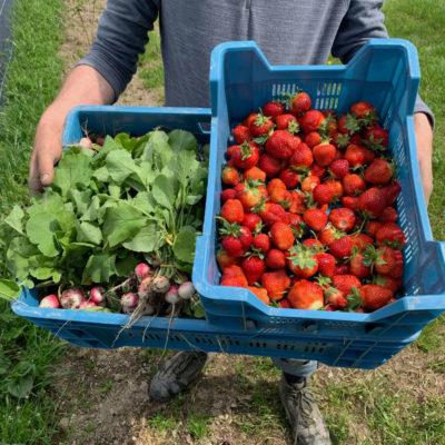 caisse de radis bio et de fraises bio