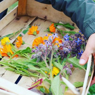 caisse avec des fleurs dedans
