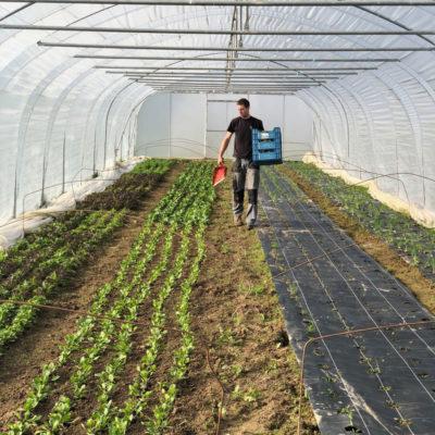 plantation bio sous serre