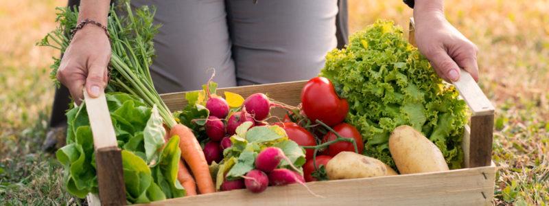 panier de légumes bio proposé par CERTISYS